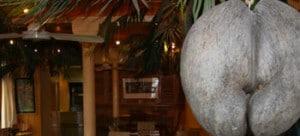 coco de la mer restaurant